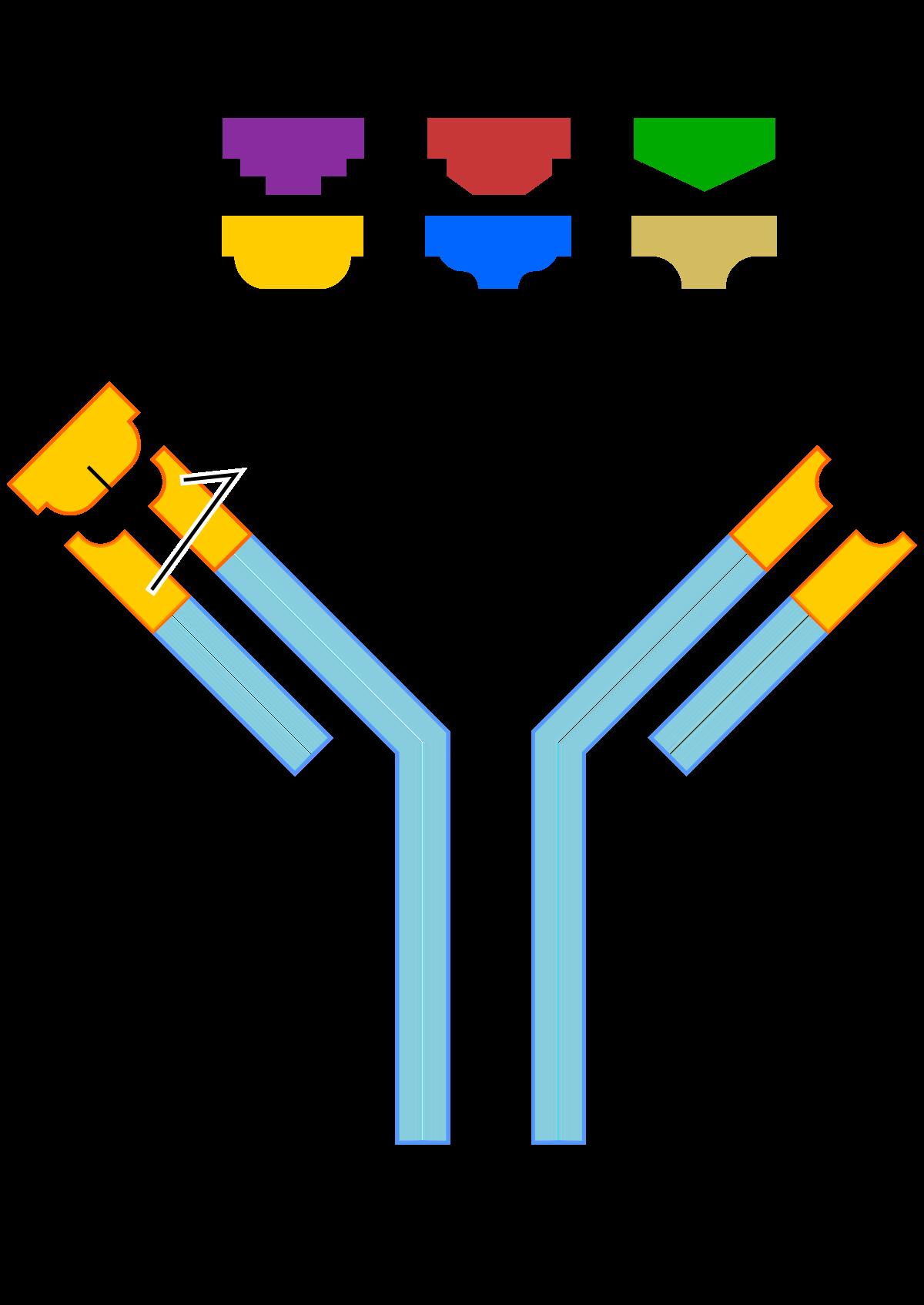 nyelőcsőrákhoz kapcsolódó hpv rák jele