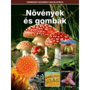 baktériumok és gombák)