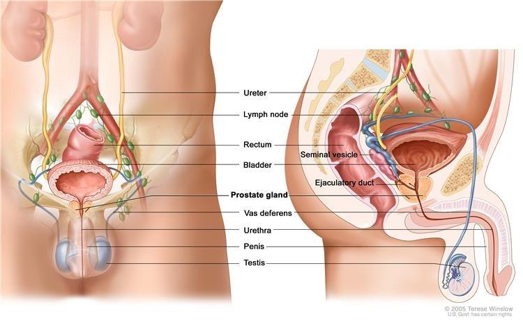 humán papilloma nőknél antibiotikum kezelés