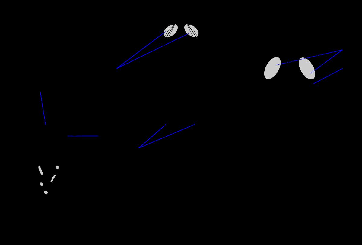 paraziták kutakkal ellátott vízben