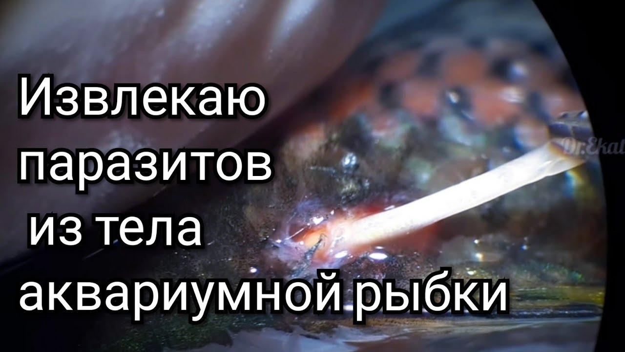 tisztítás a parazitáktól füsttel)