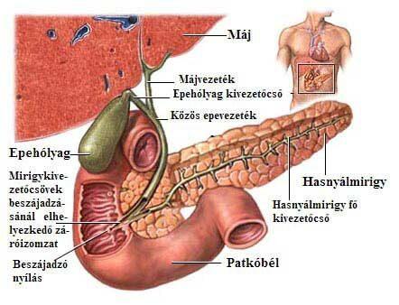 botulinum toxin b parazita tisztítás tranzit