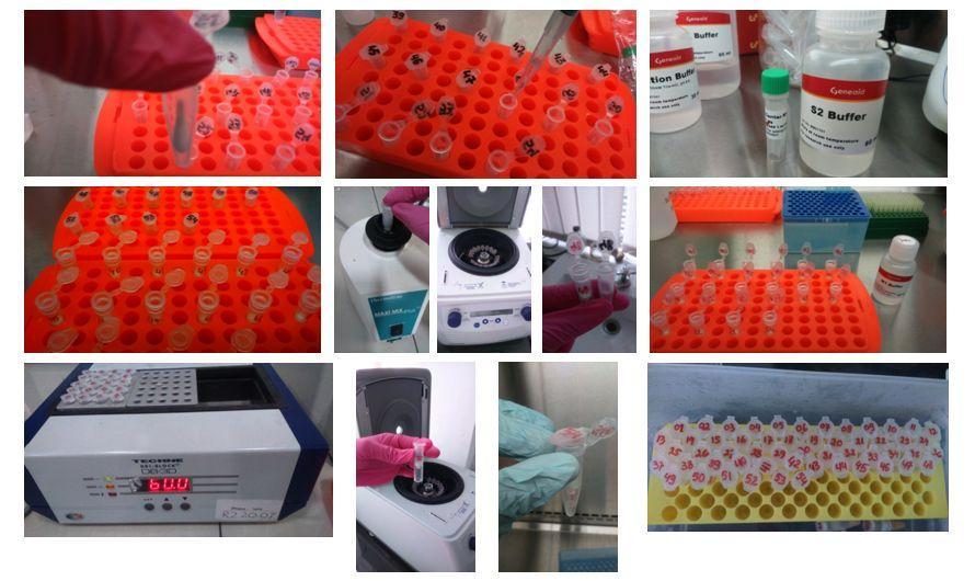 hpv4 humán papillomavírus négyértékű)
