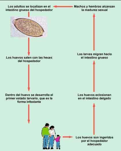 parazita enterobiosis