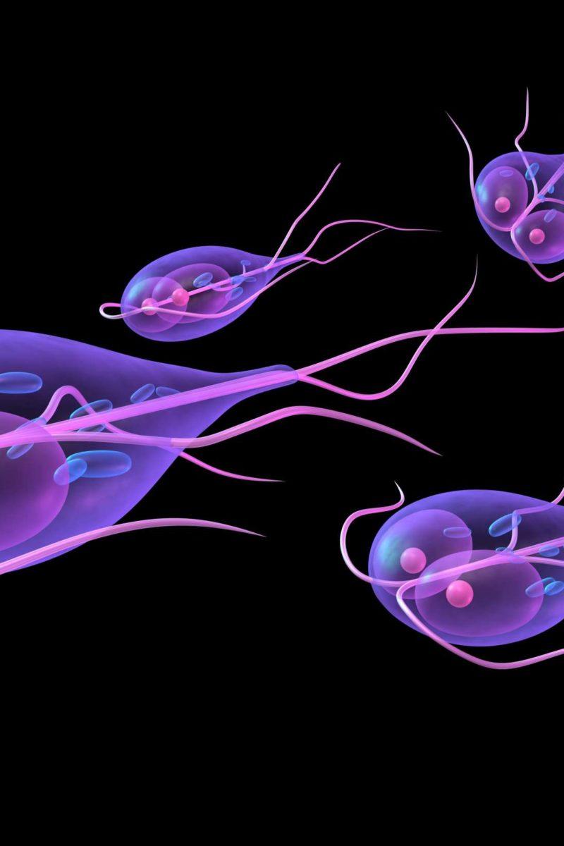parazita oocita giardia mik a szemölcsök és hogyan terjednek