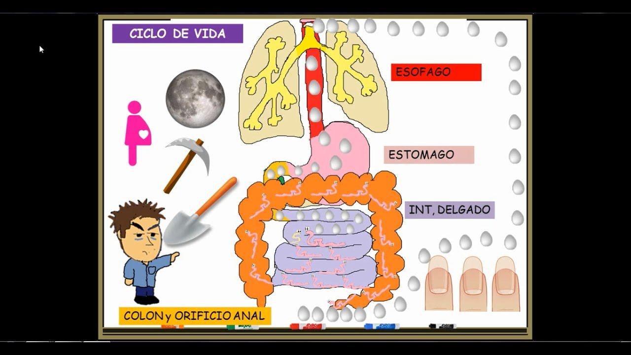 mit csinálnak a férgek vény nélkül kapható gyógyszereket orr vestibularis papilloma