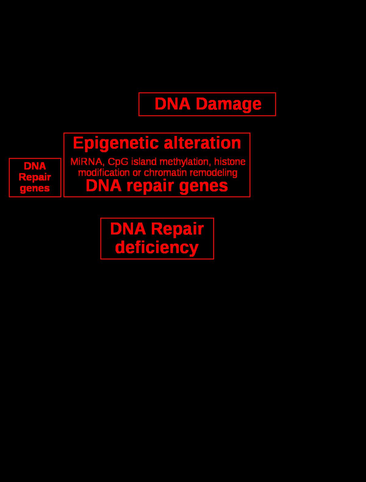 paraziták kezelése emberben helmintus és protozoon vizsgálatok