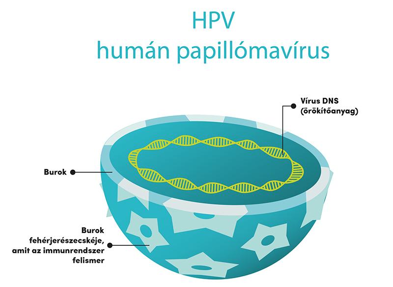a papillomavírus