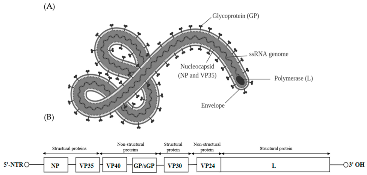 pinwormok és szövődményeik