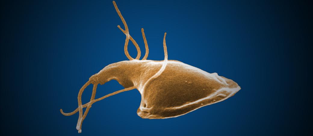 Készítmények lamblia parazitákhoz. Giardia-fertőzés (giardiasis)