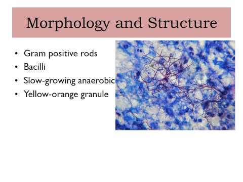 Típusú ureaplasma a nők tünetei és kezelése, Ureaplasma paraziták tisztítása