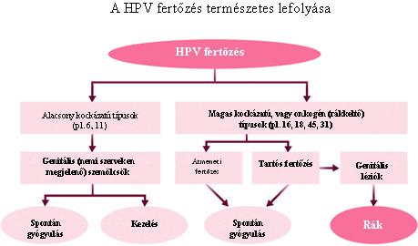 hpv 16 és a rák kockázata)
