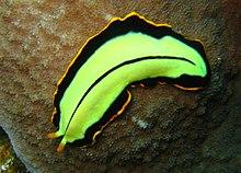 condylomata acuminata krémek