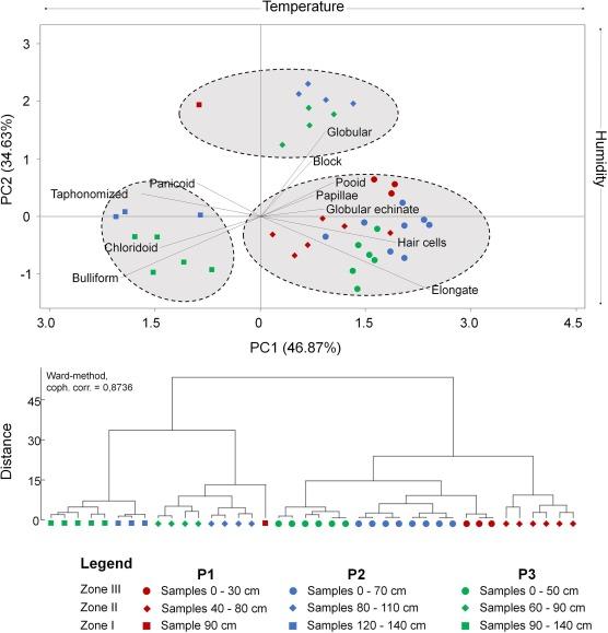 kerületi papillae nyelvkezelés blastocystis hominis paraziták nedir