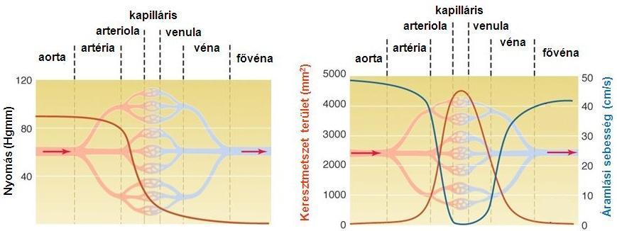 antitestek a kerek spirál ellen hpv ujj szemölcsök
