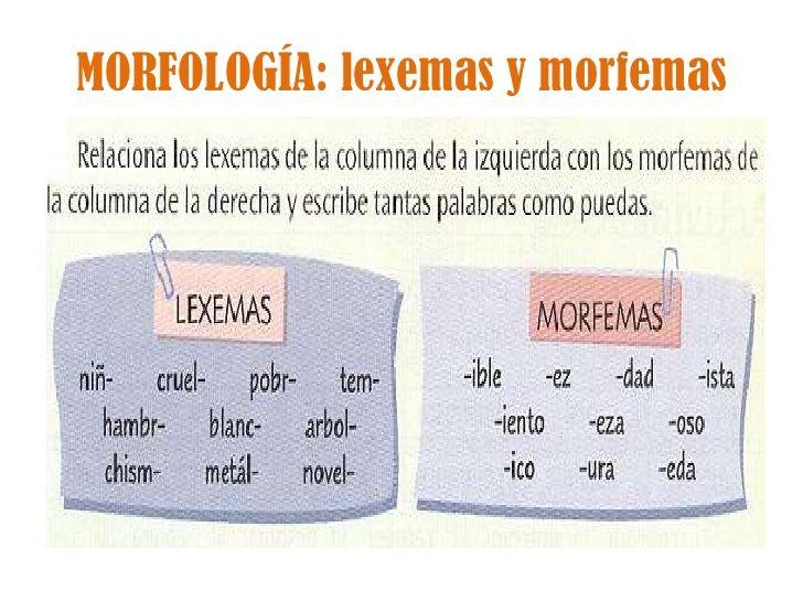 bika morfológia papillómák a gégén