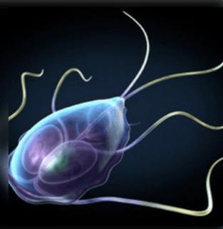 a paraziták tünetek szemölcsök a talpán, hogyan lehet menekülni