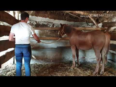 tejelő férgek humán papillomavírus fertőzés pozitív