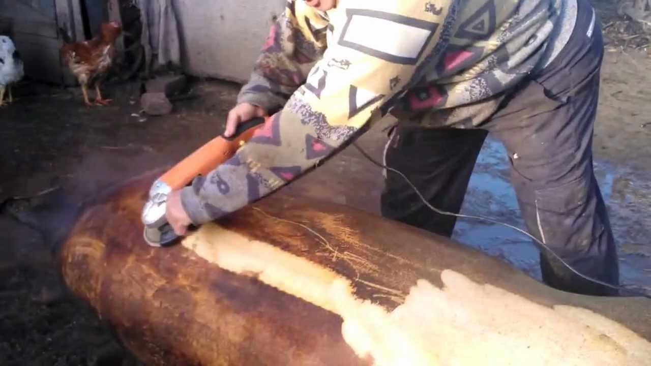 disznóbél tisztítása a giardiasis krónikus kezelése