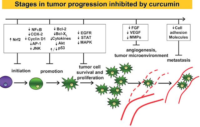 neuroendokrin rák szalag színe