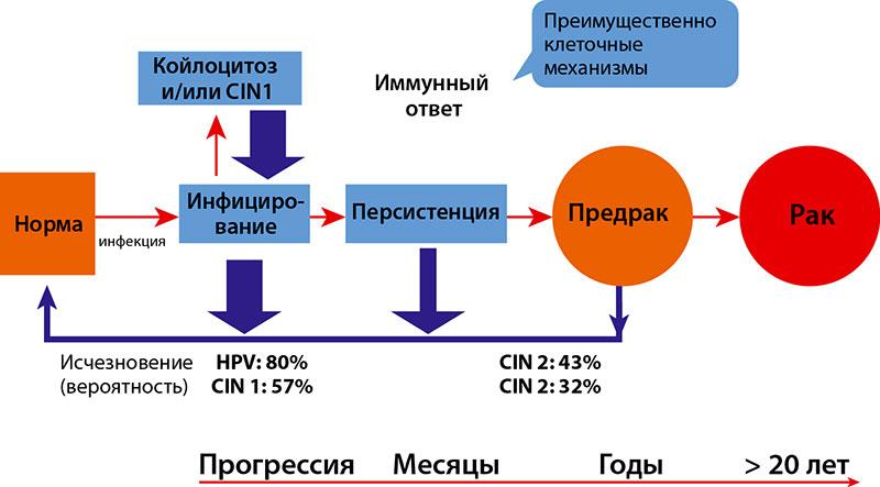 az izoprinosin papilloma vírus áttekintése a férgek gyors kezelése gyermekeknél