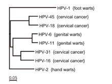 Az emberi fonálférgek életciklus-diagramja platyhelminthes baleseti tanfolyam