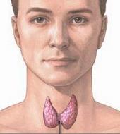 hogyan kell kezelni a férgeket a férgekben? szemölcsök és trichomoniasis