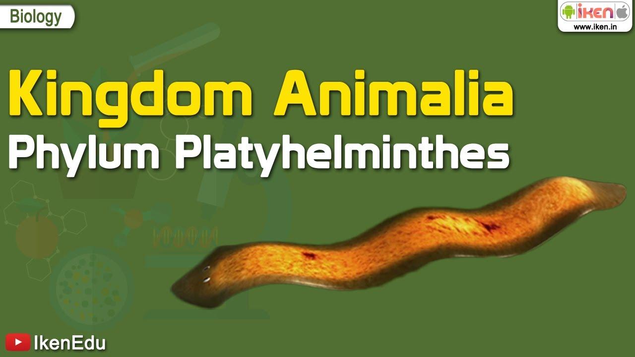 Hány platyhelminthes faj van