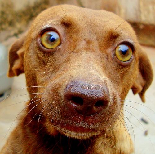papillomavírusos szemek