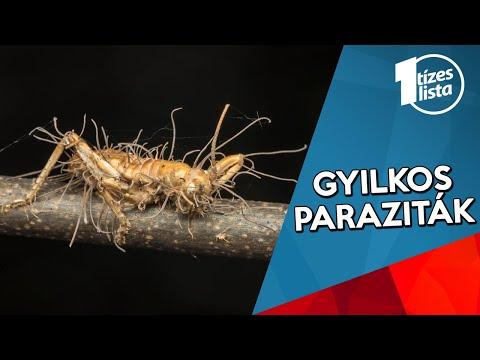 paraziták előállítására szolgáló hamu papilloma yorkban hogyan kell kezelni