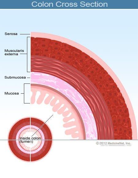 paracom paraziták ellen méregtelenítő cseppek a parazitáktól