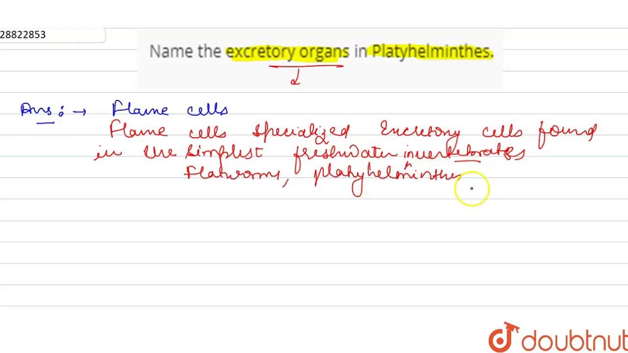 exkretionsorgane plathelminthen