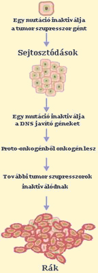 nemi szemölcs krémek szarvasmarha papillomatosis tünetei