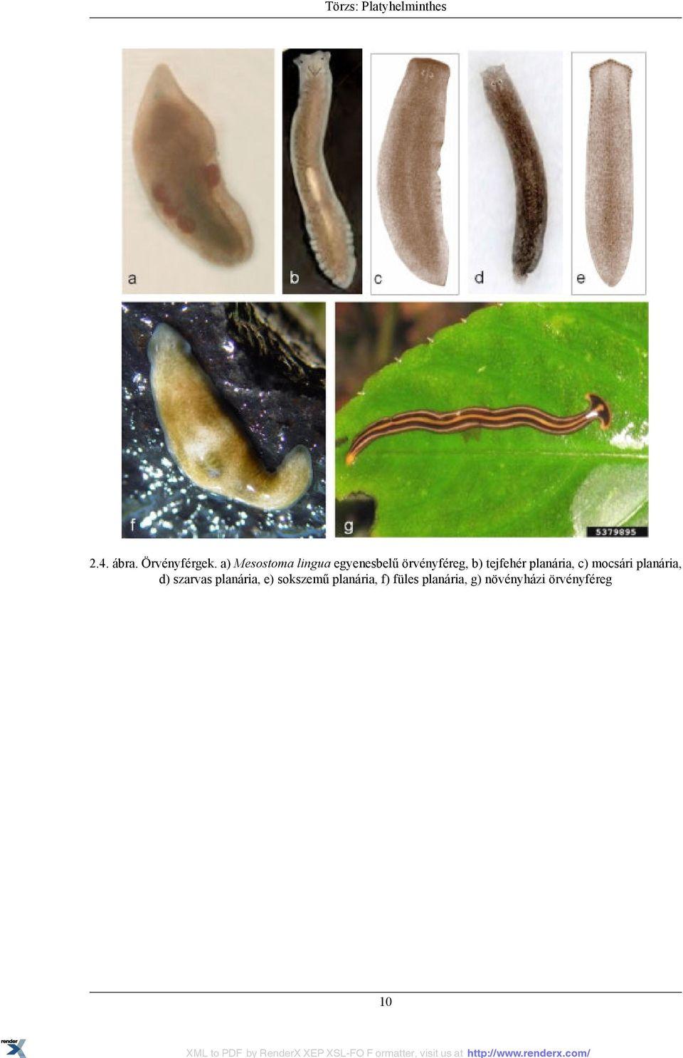 paraziták folyékony citricid