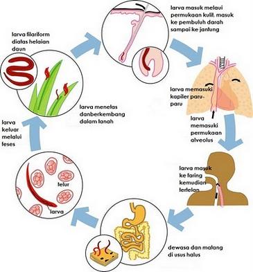 papillomavírus és alacsony születési súly