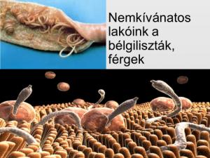 parazita megtévesztés A rák utolsó fázisának tünetei