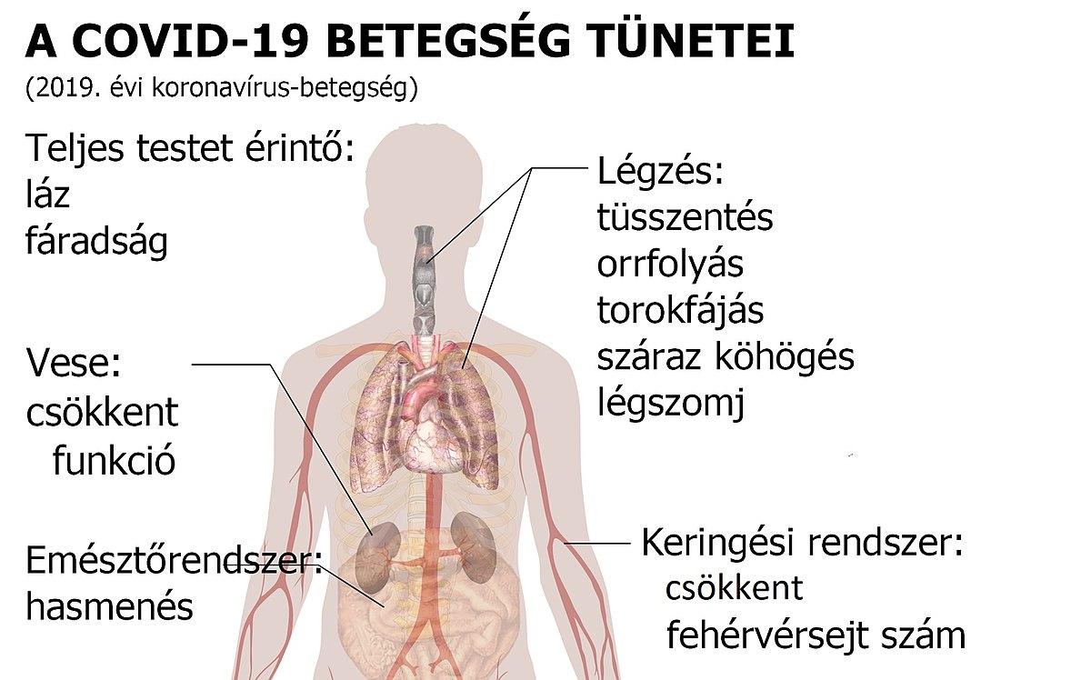 az emberi keresések által érintett szervek
