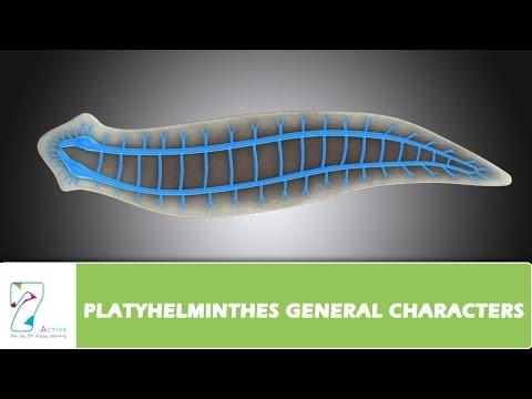 platyhelminthes féreg pelyhes hpv gége papillomatosis